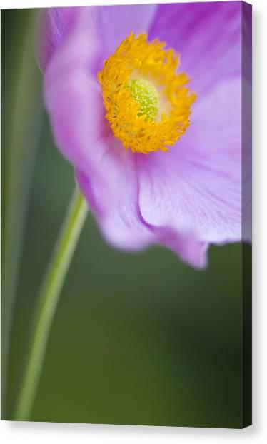Decorativ Canvas Print - Garden Beauty by Silke Magino