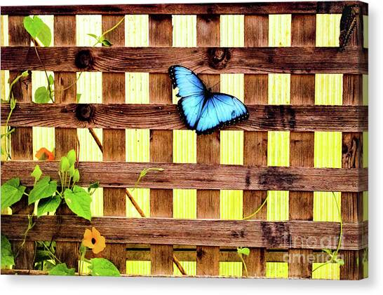 Garden Fence Canvas Print
