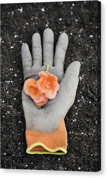 Garden Glove And Flower Blossoms4 Canvas Print