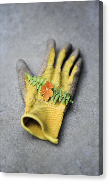 Garden Glove And Pansy Blossom2 Canvas Print