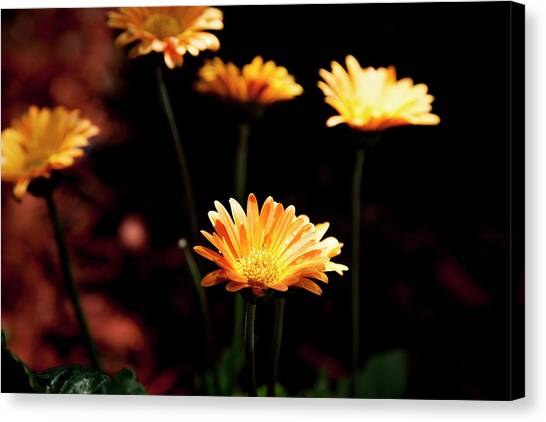Garden Light Canvas Print