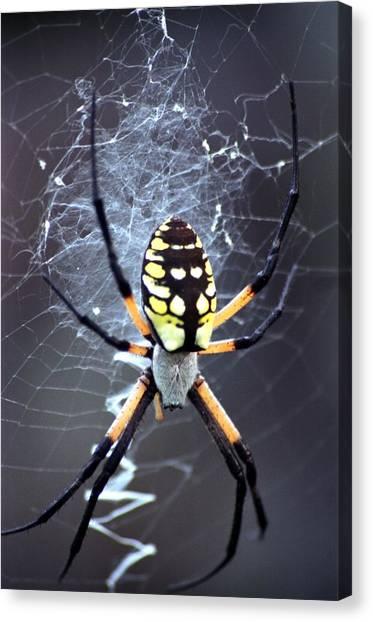 Garden Spider Canvas Print by Bob Guthridge