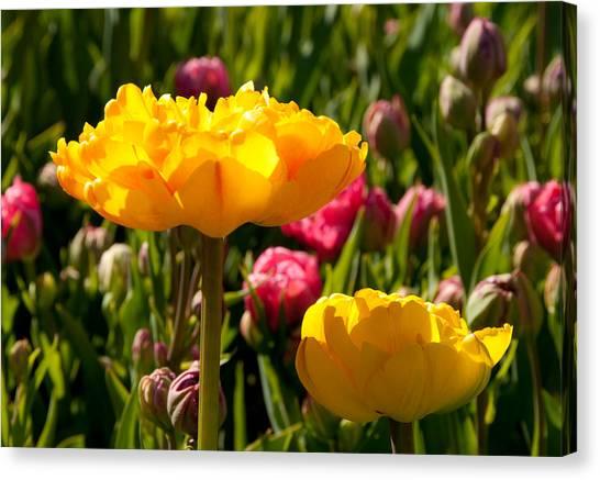 Garden Sunshine Canvas Print by Charlet Simmelink