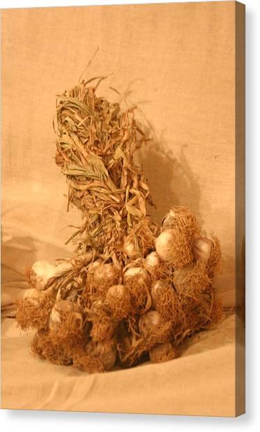 Garlic Time 3 Canvas Print by Jez C Self