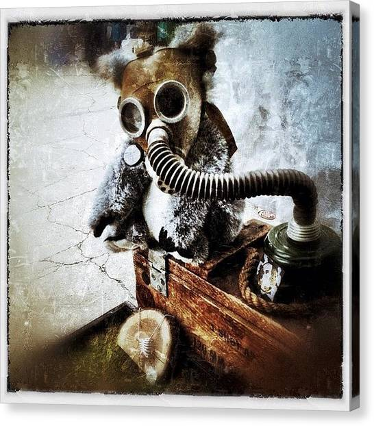 Large Mammals Canvas Print - Gas Mask Koala by Natasha Marco