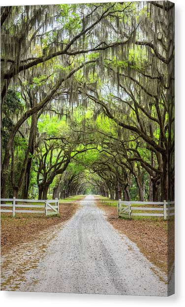 Gated Wormsloe Plantation Canvas Print
