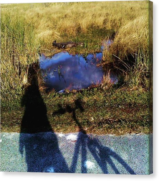 Everglades Canvas Print - Gater Spotted On Bike Trail Shark by Rg Field