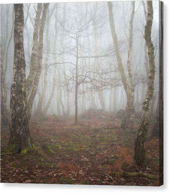 Sherwood Forest Canvas Print - Gather Round by Chris Dale