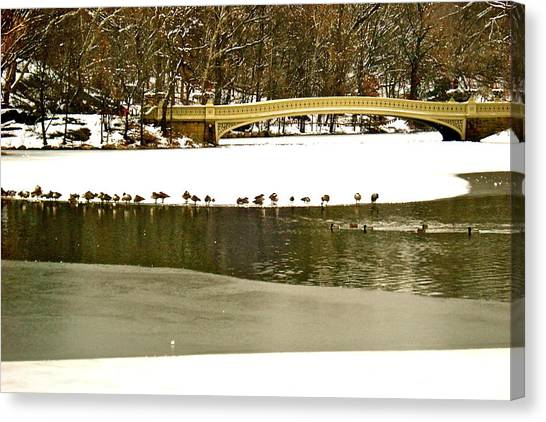 Gathering Of Ducks Canvas Print
