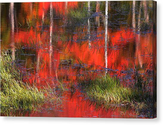 Gatineau Marsh Fall Colors Canvas Print