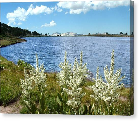 Gaylor Lakes And Queen Anns Lace Eastern Sierra Photo Canvas Print