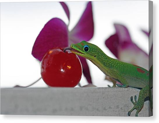 Gecko And Cherry Canvas Print by Sue Mayor