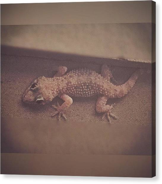 Lizards Canvas Print - Gecko #enlight #bugcatcher #lizard by Joan McCool