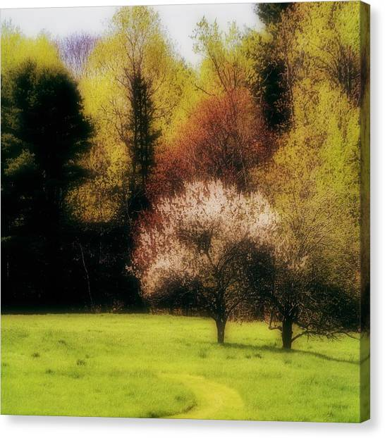 Canvas Print - Geele Farm Meadow by Modern Art