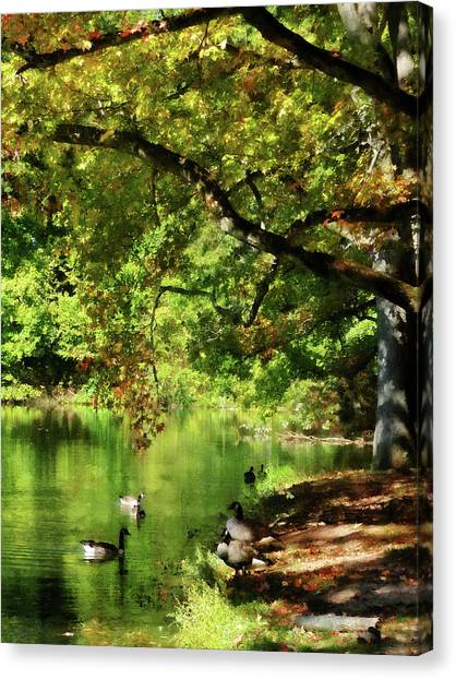 Geese By Pond In Autumn Canvas Print by Susan Savad