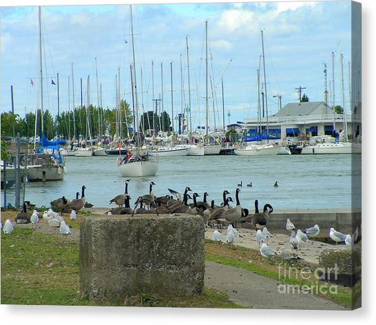 Geese By The Pier Canvas Print by Deborah Selib-Haig DMacq