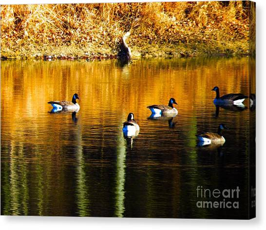 Geese On Lake Canvas Print