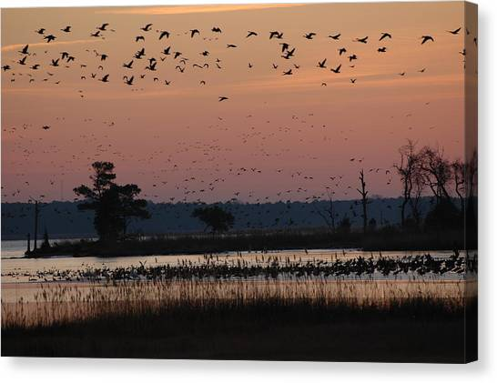 Geese On The Rise Canvas Print by Marc Van Pelt