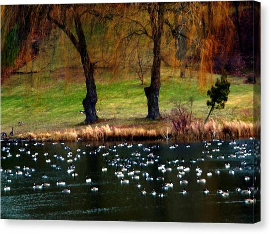 Geese Weeping Willows Canvas Print