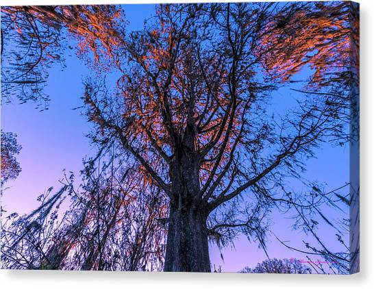 Wetlands Canvas Print - Gentle Giant by Marvin Spates