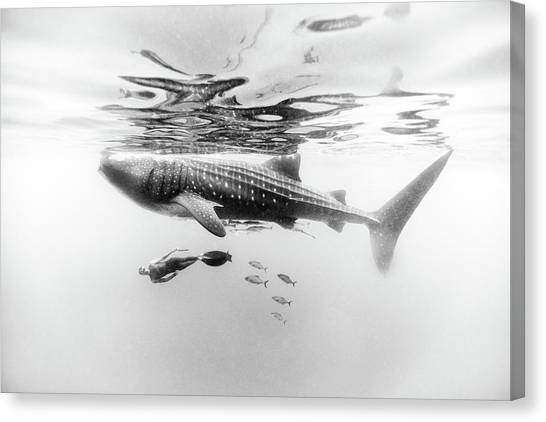 Gentle Giant Canvas Print by One ocean One breath