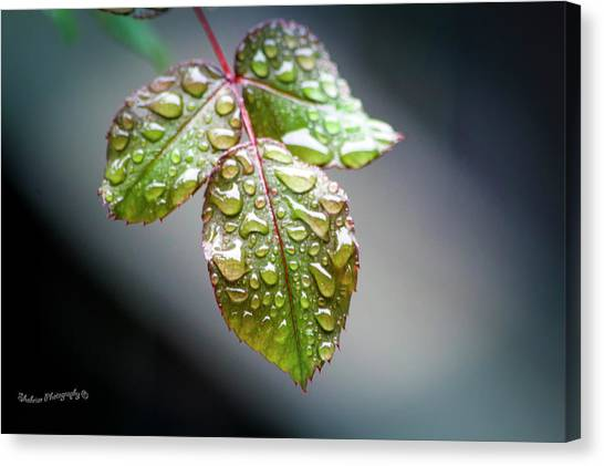 Gentle Rain Drops Canvas Print