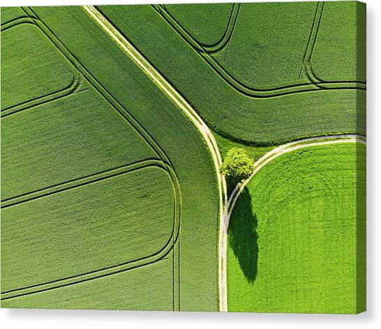 Geometric Landscape 05 Tree And Green Fields Aerial View Canvas Print