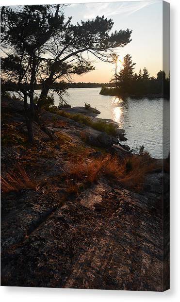 Georgian Bay Rock-wild Grass At Sunset Canvas Print
