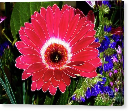 Gerbera Bella Canvas Print