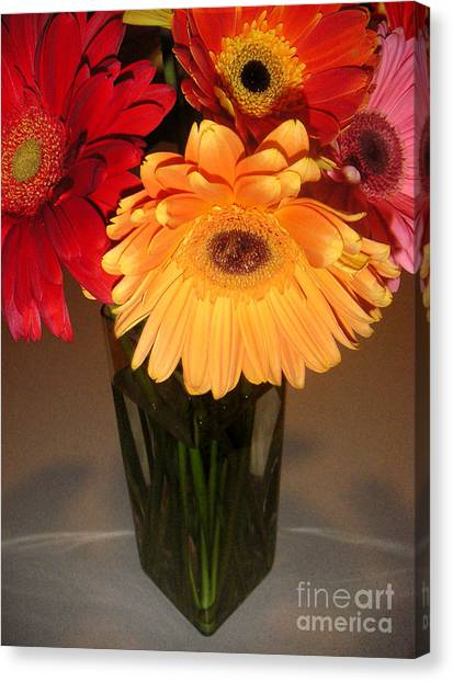 Gerbera Daisies - Vased Canvas Print by Lucyna A M Green