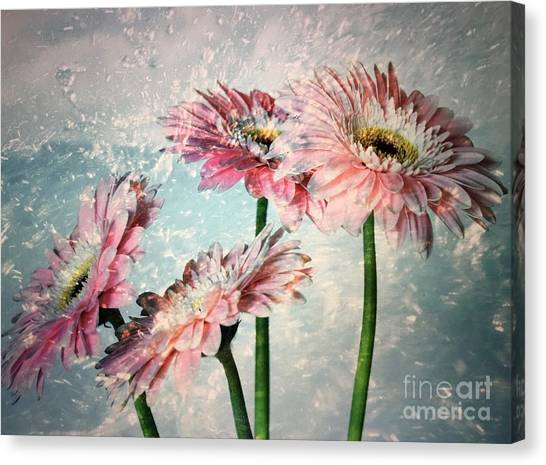 Gerbera Daisies With A Splash Canvas Print