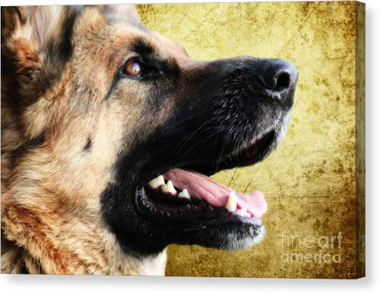 German Shepherds Canvas Print - German Shepherd Portrait by Smart Aviation