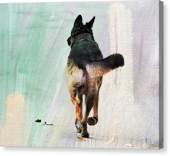 German Shepherd Taking A Walk Canvas Print