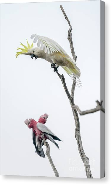 Get Off My Perch Canvas Print