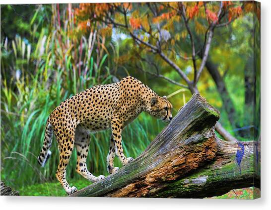 Getting The Scent Canvas Print by Keith Lovejoy