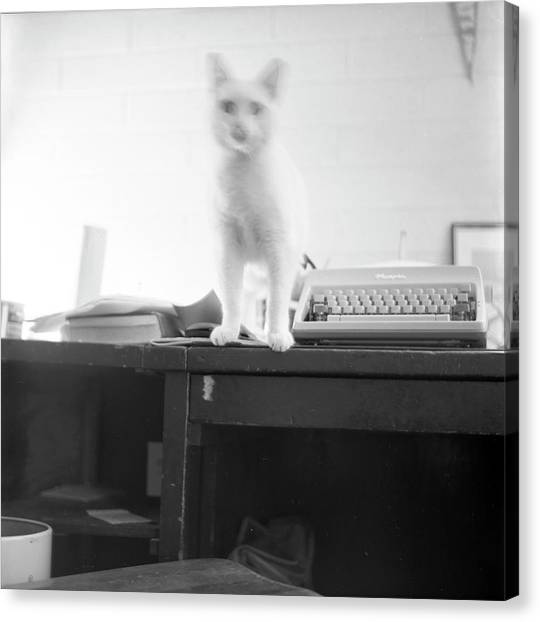 Ghost Cat, With Typewriter Canvas Print