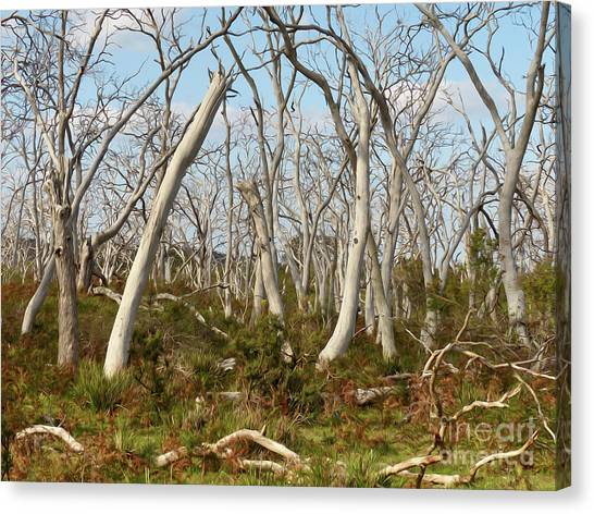 Great Otway National Park Canvas Print - Ghost Forest Cape Otway Australia by Teresa A and Preston S Cole Photography
