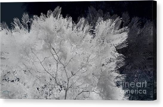 Ghost Of A Tree Canvas Print
