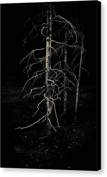 Canvas Print featuring the photograph Ghost Trees by Fred Denner