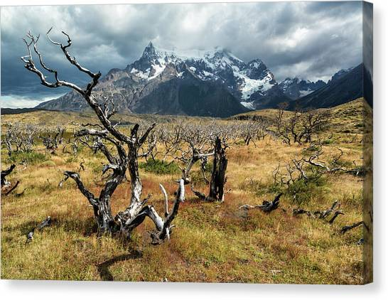 Canvas Print featuring the photograph Ghost Trees Of Patagonia by Stuart Gordon