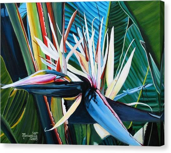 Giant Bird Of Paradise Canvas Print