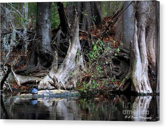 Giant Cypress Knees Canvas Print