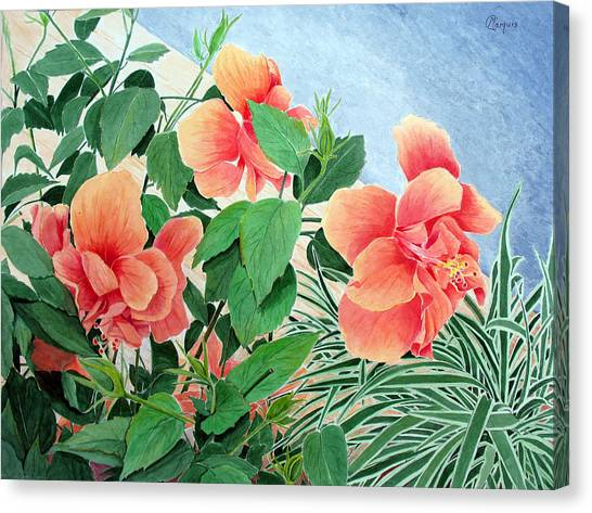 Giant Hibiscus Canvas Print by Colleen Marquis