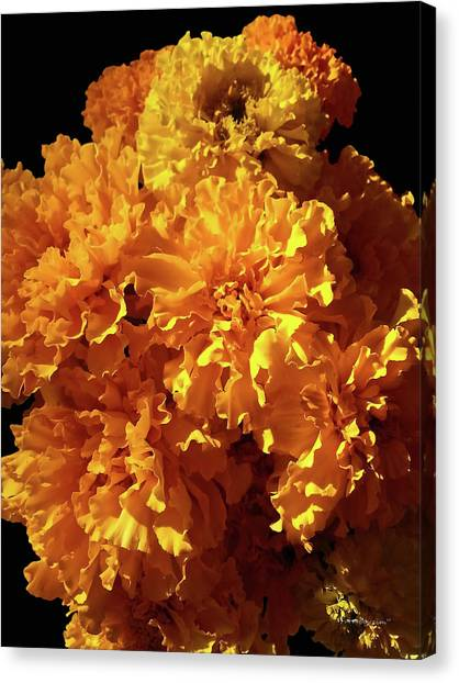 Giant Marigolds Canvas Print