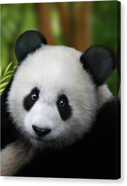 Small Mammals Canvas Print - Giant Panda by Julie L Hoddinott