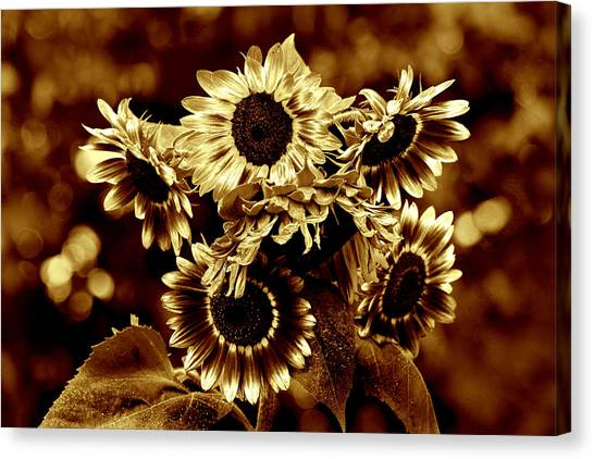 Giant Sunflowers Canvas Print by Kathleen Stephens