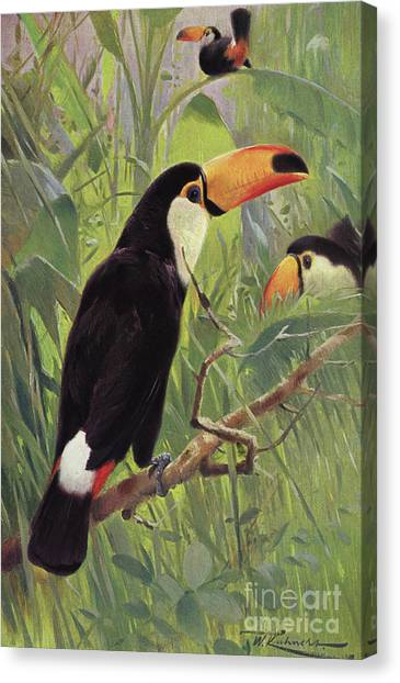 Toucans Canvas Print - Giant Toucan by Wilhelm Kuhnert
