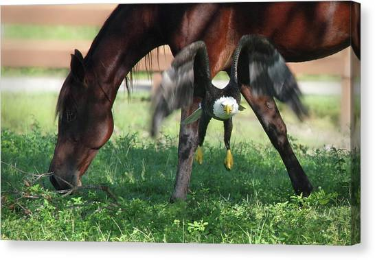 Giddy Up. Canvas Print