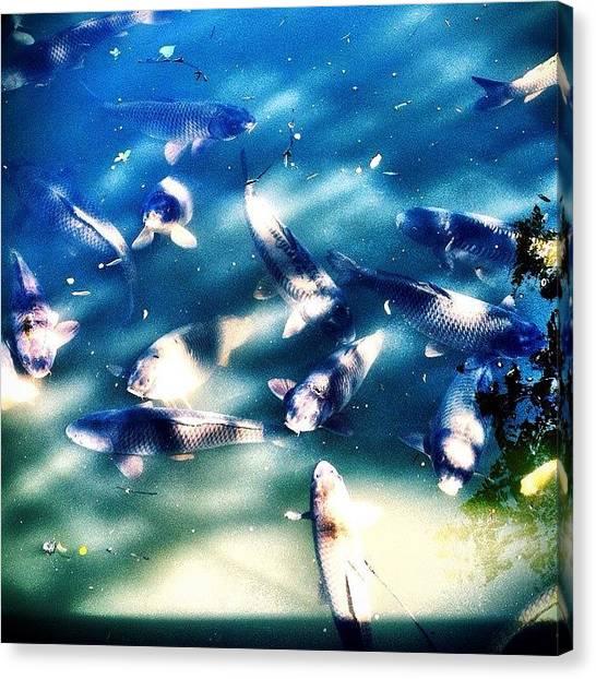 Goldfish Canvas Print - Monochrome Fish by Jen McKnight