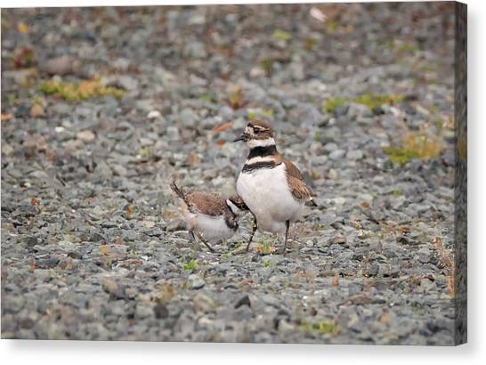 Killdeer Canvas Print - Gimme Shelter by Loree Johnson